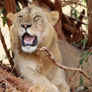 Photos Tarangire & Arusha 8