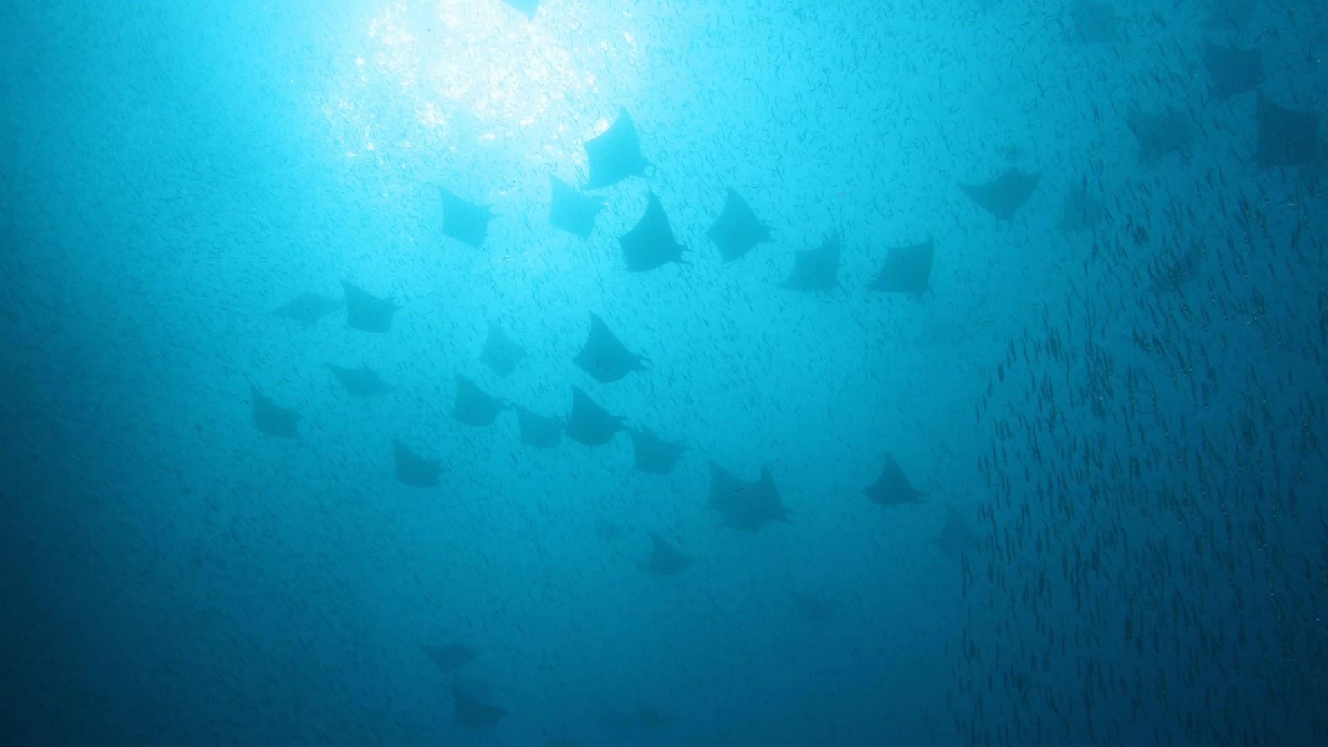 Image à la une - Médecin subaquatique