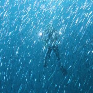 Image à la une - Plongeur