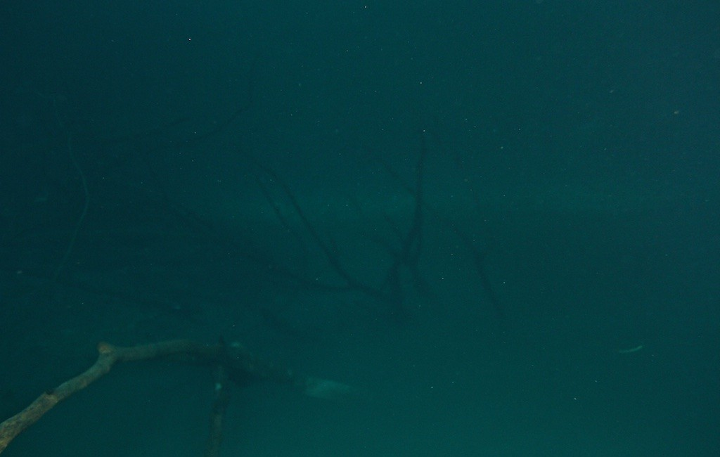 Photos Diving Cenotes 3