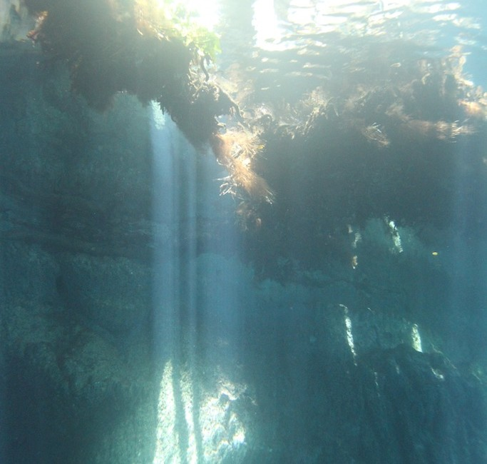 Photos Diving Cenotes 8