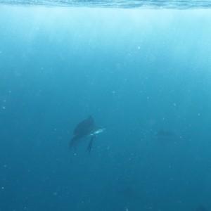 Photos Swordfish 12