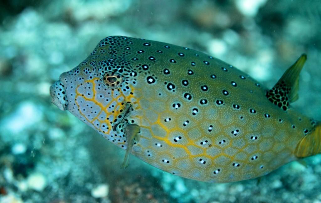 Bali diving 12