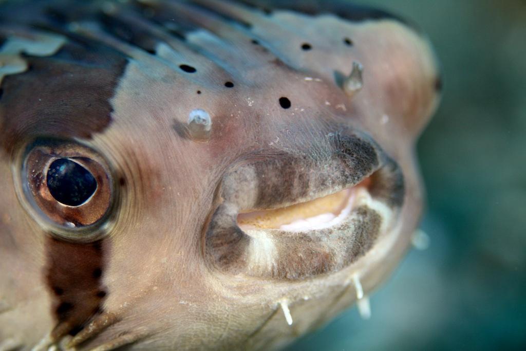 Bali diving 14