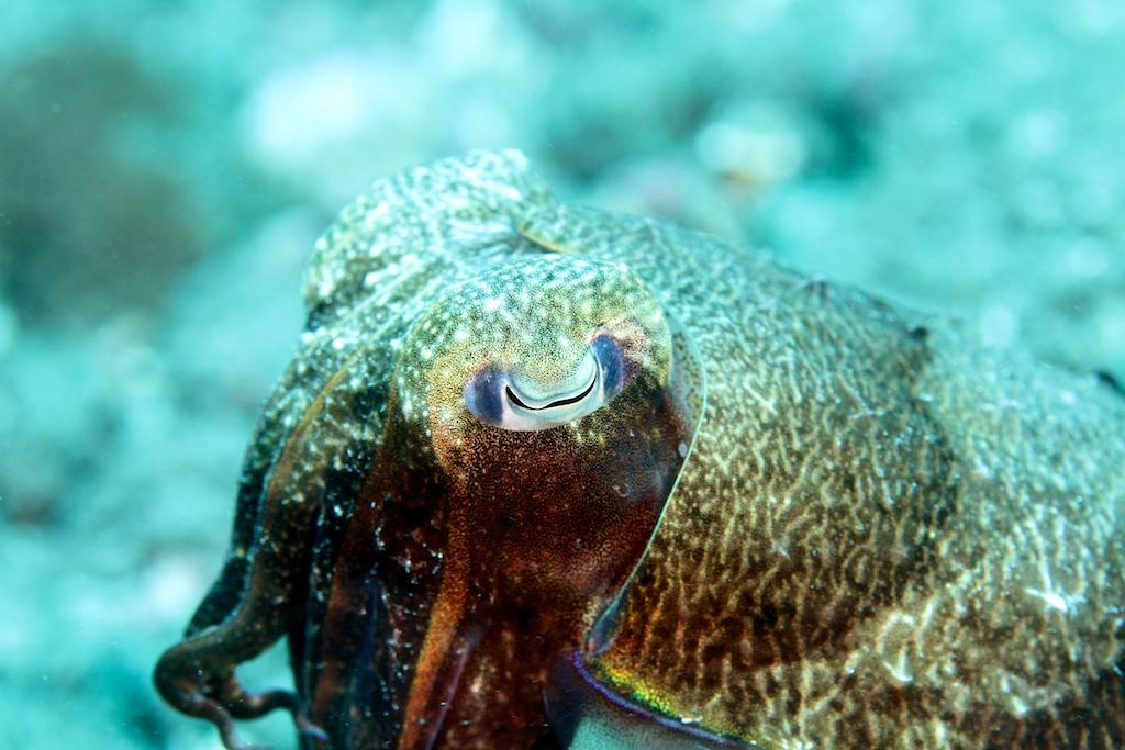 Bali diving 16