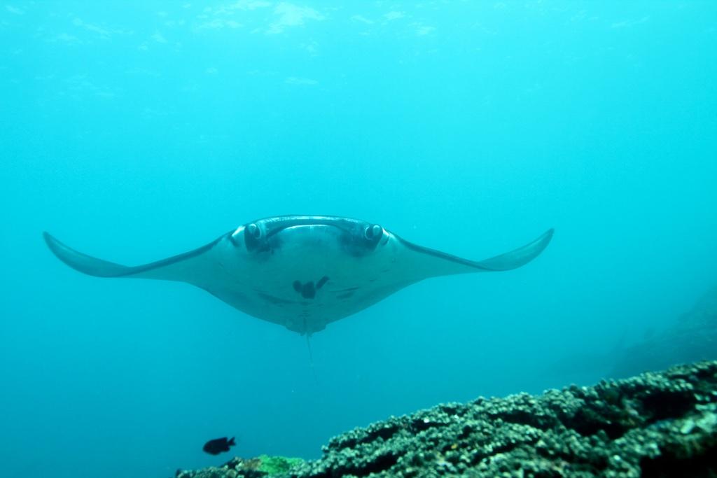 Bali diving 18