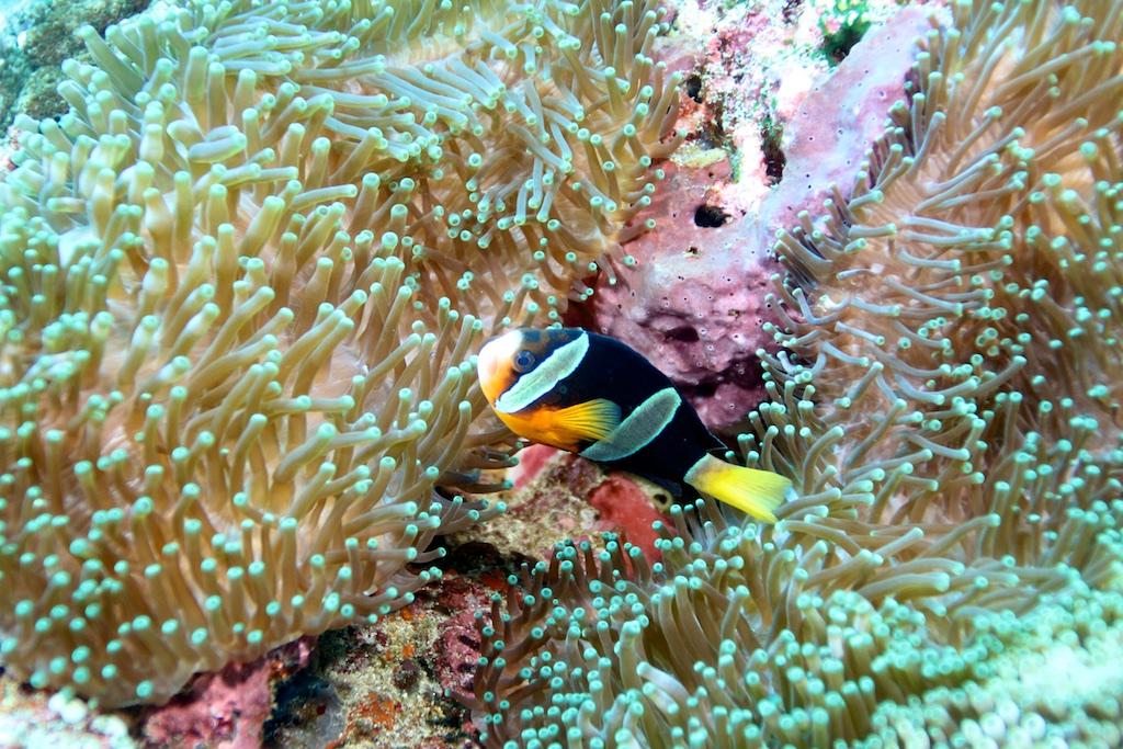 Bali diving 21