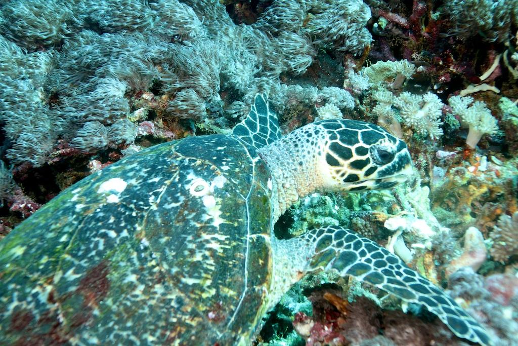 Bali diving 22