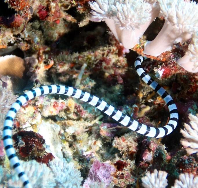 Bali diving 23