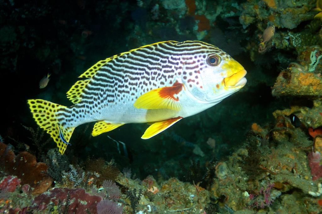 Bali diving 24