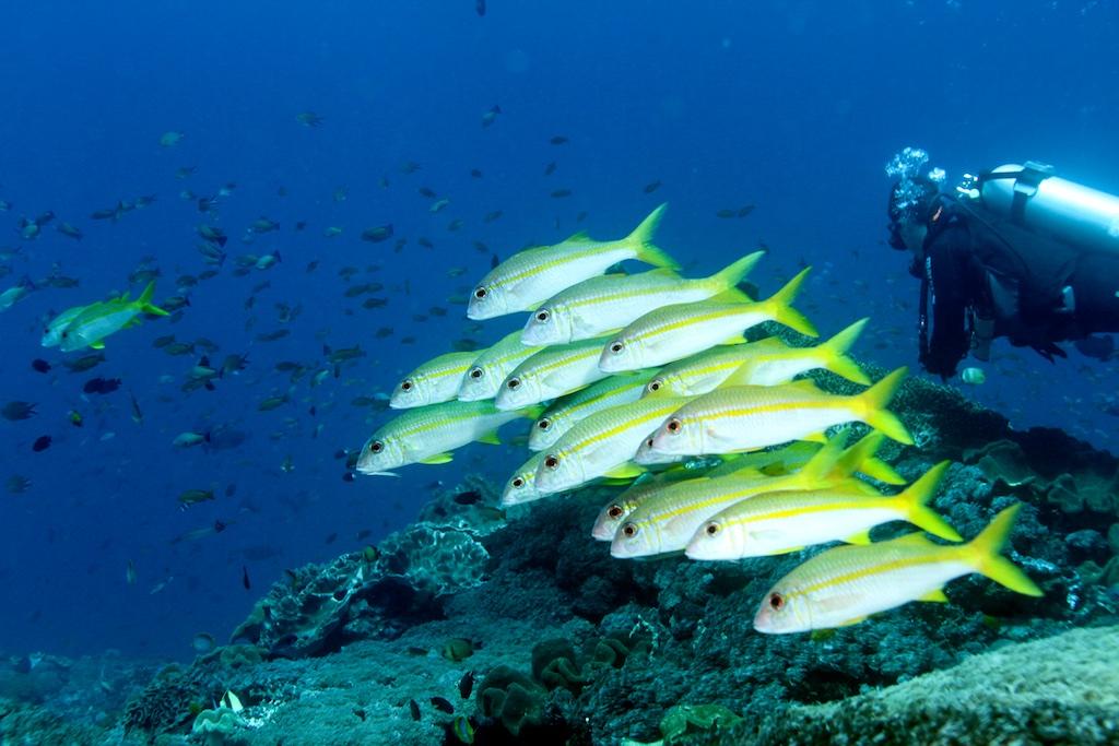 Bali diving 25