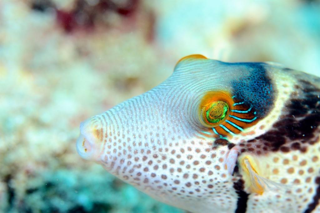 Bali diving 4