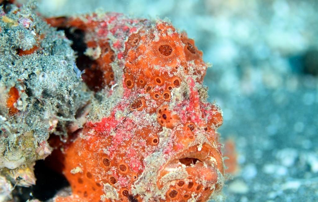 Bali diving 8