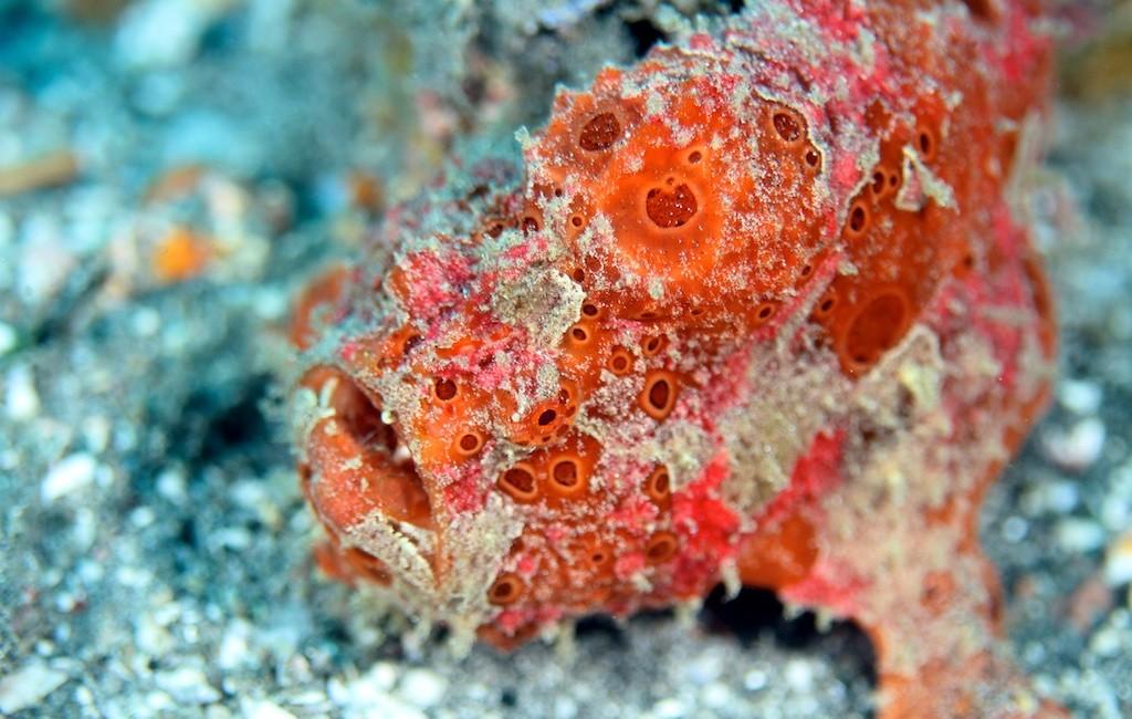 Bali diving 9