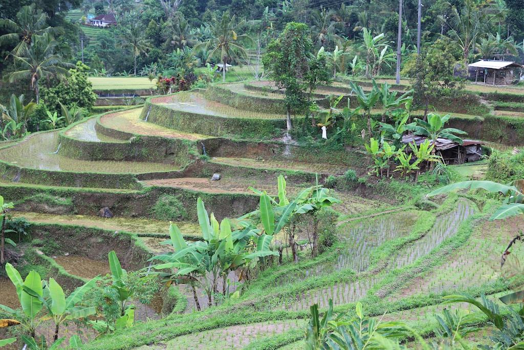 Bali terrestre 14
