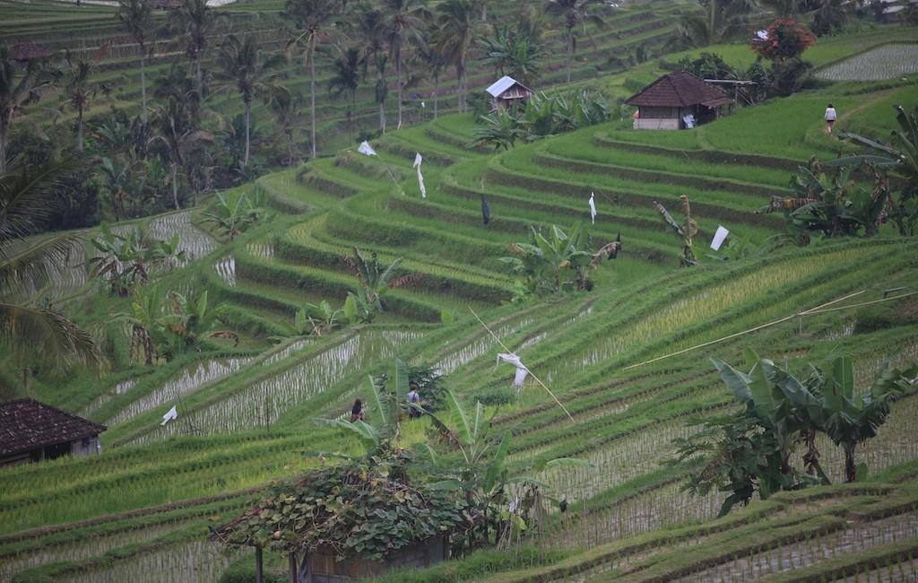 Bali terrestre 18