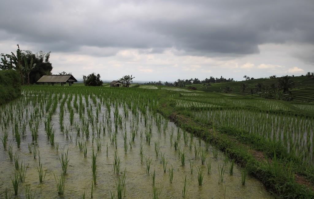 Bali terrestre 19