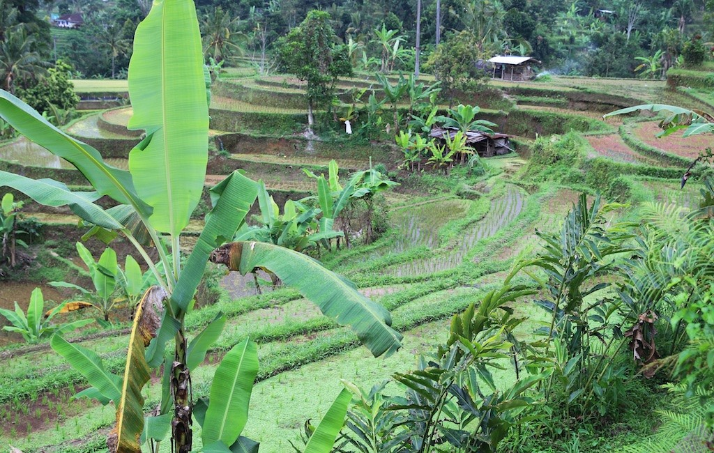 Bali terrestre 20