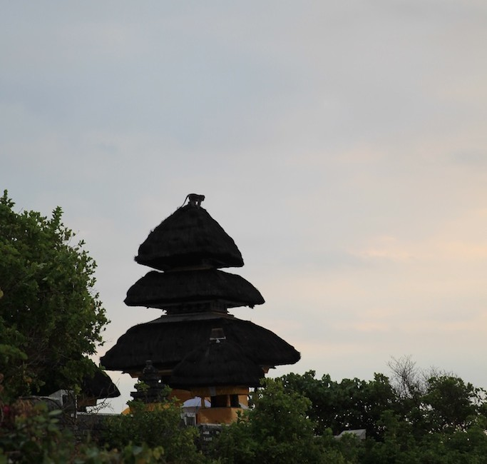 Bali terrestre 26