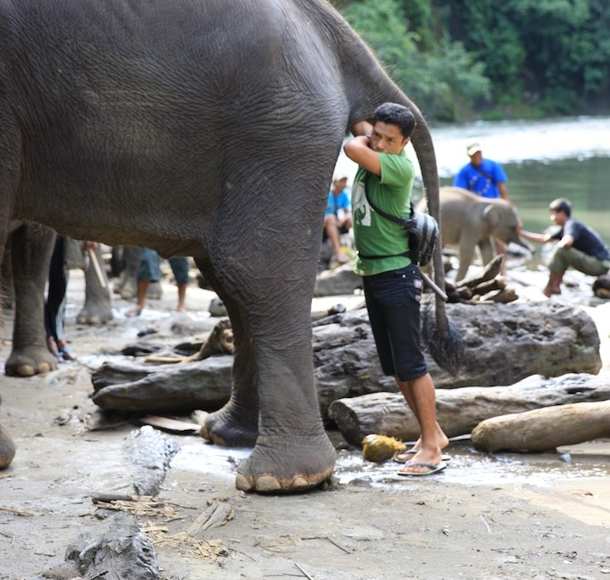 Sumatra 16