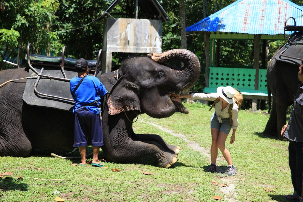Sumatra 59