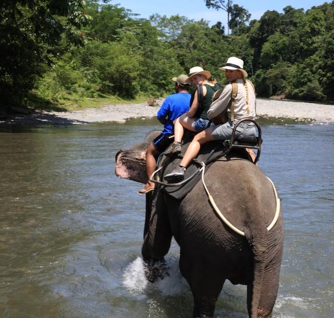 Sumatra 61