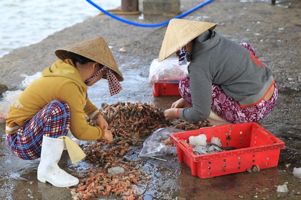 Vietnam 24